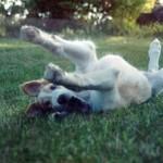 hobson-pup